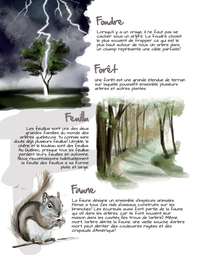 Foudre - Forêt - Feuillu - Faune