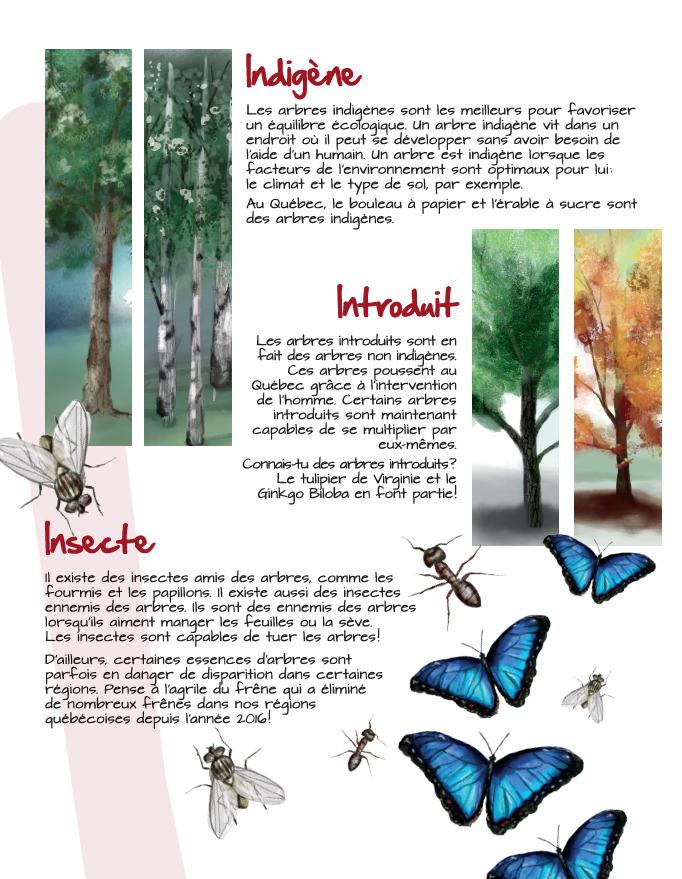 Indigène - Introduit - Insecte
